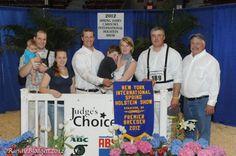 2012 NY international Holstein Spring Show