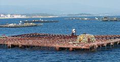 La sobre explotaci�n pesquera y acuicultura sostenible