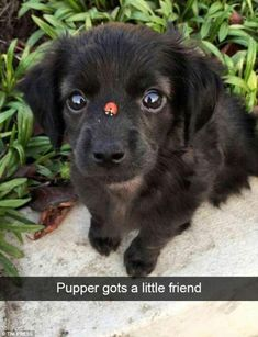 This adorable photo sees a puppy making the acquaintance of a lady bird in his garden ...