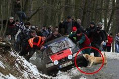 In appreciation of all our dogs, no matter the breed: They'll help you out of a ditch.