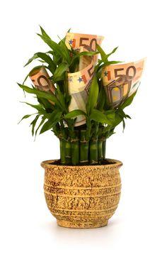 Pilt rahapuust sobib ideaalselt Raha, rikkuse ja rahulolu tsooni aktiveerimiseks.