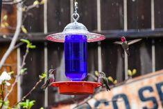 #homeliving #outdoorgardening #feedersbirdhouses #hummingbirdfeeder #dripfree #beeproof #birdfeeder #easytoclean #besthummingbird #handmadeitem #easytouse #allseason #giftformom #giftforher #hangingbirdfeeder #birdbath #hangingbirdfeeder #handmade #glassmasonjar #feedingbirds #giftforwife #cottagecore #outdoors #birdhouse #easytohang #birds