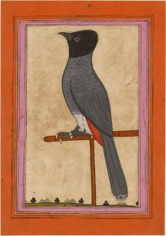 Red-vented Bulbul / Rajasthan / Mughal / Early 19th Century