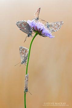 Butterflies by Steve Mackay on 500px