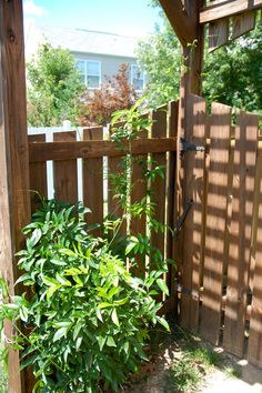 left side backyard gate area possible inspiration -put a trellis over the gate, frame with various types of plants, etc.