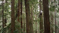 découvrez la grimpe dans les arbres