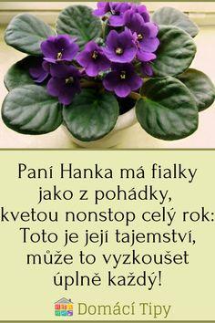 Paní Hanka má fialky jako z pohádky, kvetou nonstop celý rok: Toto je její tajemství, může to vyzkoušet úplně každý! Flora, Plants, Gardening, Garten, Planters, Lawn And Garden, Garden, Plant, Planting