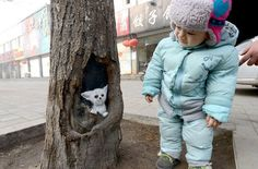 """Wang Yue calls the tree-hole paintings """"meitu"""" which means """"beautiful journey."""" The paintings on the trees have brightened the city during the dull, grey winter."""