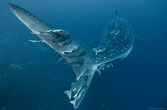 The Most Spectacular Underwater Photography of All Time   The Stuff Makes Me Happy