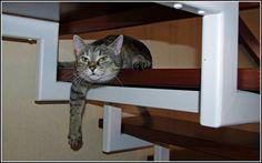 Fiona  Cool Cat