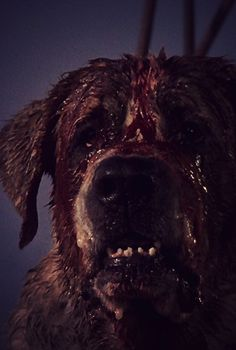Cujo (1983) probably the scariest dog movie I've ever seen