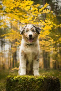 "handsomedogs: ""   Adorable / / Maciej Stawicki    """
