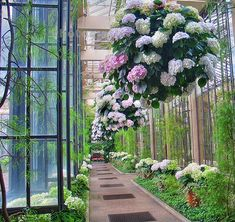 sunsurfer:  Hydrangea Walkway, Longwood Gardens, Pennsylvania photo by…