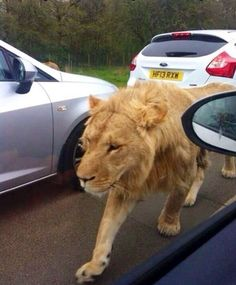 How would you like to see this walking thru traffic!