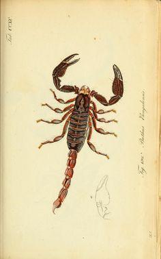bd. 8-10 (1841-1843) plates 253-360 - Die Arachniden : - Biodiversity Heritage Library
