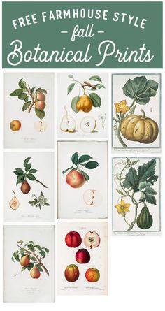 Free fall botanical prints, farmhouse style fall botanical prints, farmhouse botanical prints, botany prints, vintage botanicals