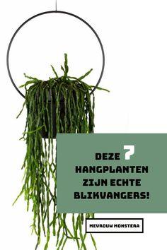 Heb jij planteninspiratie nodig? Ga eens voor een hangplant! Deze 7 hangplanten voor binnen zijn echte blikvangers en zorgen voor een fijn sfeertje in je huis! En deze zijn ook nog eens heel makkelijk te verzorgen. #hangplanten #kamerplanten #binnenplanten #planten #plants #indoorplants #blikvangers #planteninspiratie #plantinspiration #urbanjungle #mevrouwmonstera Hangers, Herbs, Interior, Plants, Home Decor, Clothes Hanger, Decoration Home, Indoor, Room Decor
