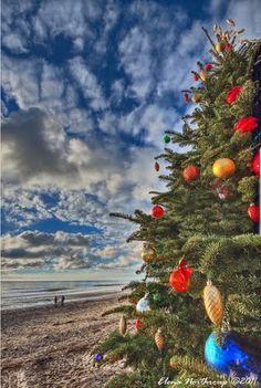 Christmas Tree at Crystal Cove State Park, Newport Beach, California