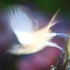 Bird, Animals, Pictures, Animales, Animaux, Birds, Animal, Birdwatching, Animais
