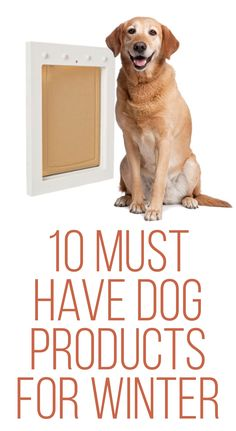 10 Must Have Dog Products For Winter!