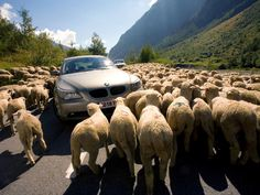 The perfect way to see the Scottish countryside? Rent a car for a scenic drive, but beware, this may happen to you.
