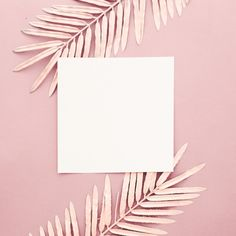 Pink palm leaves with blank frame on pink background Free Photo Flower Background Wallpaper, Framed Wallpaper, Graphic Wallpaper, Frame Background, Pink Wallpaper Iphone, Pastel Background, Background Images, Aztec Wallpaper, Beauty Background