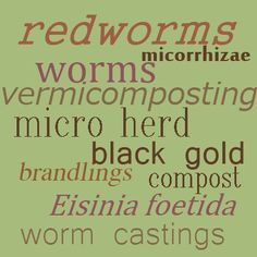 Vermicomposting or worm farming is one way to get great quality compost in almost pure form. Composting At Home, Worm Composting, Earthworm Farm, Worm Beds, Red Wiggler Worms, Red Wigglers, Worm Castings, Compost Tea, Sustainable Farming