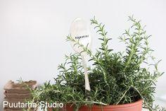 Rosmariini-yrttimarkkeri Sarin puutarhablogissa // Fengshui puutarhassa | Asuntomessut