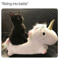 Funny Animal Pictures Dump of the Day – 20 Lustige Tierbilder Dump des Tages – 20 Funny Animal Jokes, Funny Cat Memes, Funny Animal Videos, Cute Funny Animals, Animal Memes, Funny Cute, Animal Humor, Super Funny, Funny Videos