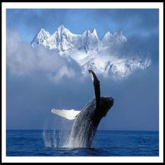 Amazing and graceful , beautiful Alaska: Just to be in the PRESENCE of this animal is Awesome! to say the least What BEAUTY!@