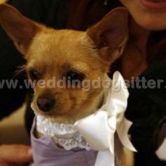 Www.weddingdogsitter.com x Polly!