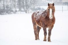 How Immunosenescence Impacts Senior Horse Care -- Your horse's immune system is aging with him. Here's what to remember when managing your old horses.