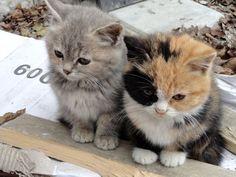 Cute Kitten Babies...