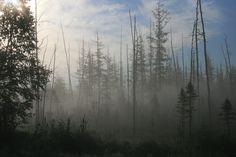 https://upwoods.files.wordpress.com/2011/09/sept-6-009.jpg