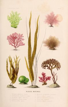 Marine algaes -- found in our Tokara hair and skincare products