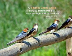 Momento Versículos: Jesus não veio revogar a lei, mas cumprir (Mateus ...