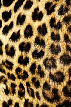 Leopard Print, Brown, Caramel Colored