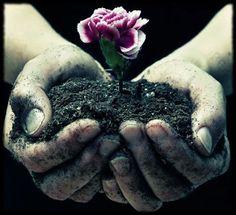 ''Quem #ama #preserva. #Preservar o #meio #ambiente, é #preservar a #VIDA.'' -Andrea Taiyoo #natureza