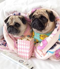 Acquire terrific recommendations on pug dogs. They are actually offered for you … Adquiere excelentes recomendaciones sobre perros pug. Pug Puppies, Cute Dogs And Puppies, Doggies, Cute Funny Animals, Cute Baby Animals, Cute Baby Pugs, Pugs In Costume, Doug The Pug, Cute Animal Pictures