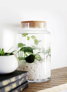 DIY Indoor Water Garden @themerrythought ! So gorgeous and easy to create!