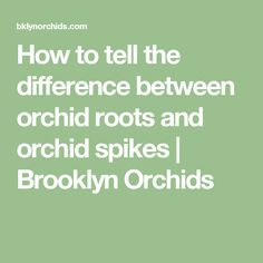 How to tell the difference between orchid roots and orchid spikes | Brooklyn Orchids