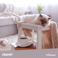 Para acabar com as marcas das garras do seu gato na mobília, encha um copo com três quartos de azeite e um quarto de vinagre. Depois é só molhar um pano na mistura e limpar a área danificada.