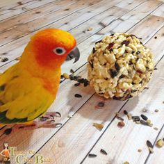 For pet birds or outdoor birds, these homemade popcorn ball treats will be a huge hit! #sponsored