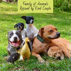 This family has been adopting for over ten years! They've adopted cats, dogs, and even ducks. Such a great rescue story with a loving and happy family