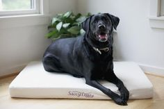 The Savvy Doggy™ from Savvy Rest Organic Mattresses supports your pooch in pure comfort. Organic cotton flannel surrounds a sturdy core of pressure-relieving, snooze-inducing natural latex.