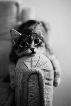 cutie-pie...