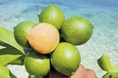 5 Insanely Good Reasons Why You Should Be Eating Guineps | The Jamaican Blogs