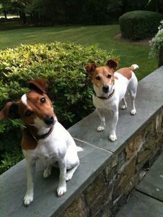 E-mail - hanneke reijnders - Outlook Perros Jack Russell, Chien Jack Russel, Jack Russell Mix, Jack Russell Puppies, Boxer Dogs, Pet Dogs, Dogs And Puppies, Chihuahua Dogs, Parson Russell Terrier