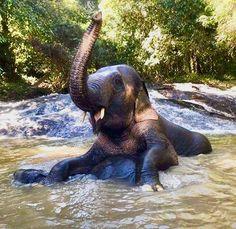 Visit my website www. Elephant Life, Elephant Bath, Asian Elephant, Baby Elephant, Elephant Pictures, Elephants Photos, Save The Elephants, Animal Pictures, Animal Magic