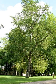 Parc du Domaine Royal de Randan Country Roads, France, Plants, Park, Plant, Planets, French